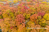 63876-02318 Aerial view of fall color trees Stephen A. Forbes State Park Marion Co. IL