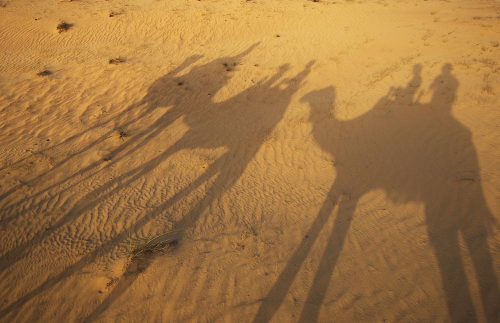 Dromedary camel caravan ride for tourists, Camelus dromedarius, Dubai desert conservation reserve, Dubai.