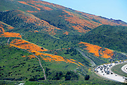 Travelers along I-15 near Lake Elsinore got a spectacular treat as California poppies filled the hillsides after rainy winter. The 'Super bloom 2019' in Southern California in Walker Canyon is stunning and drawing huge crowds.