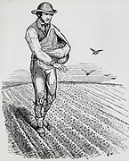 Solwing seed broadcast using a sowing sheet. Engraving, 1855.