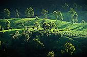 Sri Lanka - Tea Plantations & the Hill Country