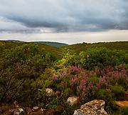 Landscape, autumn colours