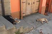 Street dogs napping on the steps of Cerro Alegre, Valparaiso.