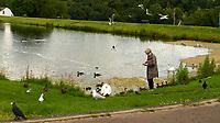 Mute Swan (Cygnus olor), Mallard, (Anas platyrhynchos), Herring Gull (Larus argentatus), Lesser Black-backed Gull (Larus fuscus), Eurasian Coot (Fulica atra), Eurasian Jackdaw (Corvus monedula), Black-headed Gull (Chroicocephalus ridibundus), Rock Pigeon (Columba livia). Murdieston Park, Greenock, Scotland. Image taken with a Leica X2 camera and 24 mm f/2 lens.