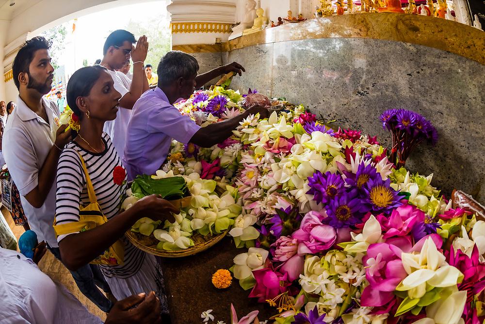 Prayer offerings, Sri Maha Bodhi, the sacred bodhi tree. Anuradhapura, North Central, Sri Lanka