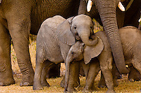 This image of baby Elephants, Camp Jabulani, near Kruger National Park, South Africa was a finalist in the African wildlife category of the 2014 Nature's Best Photography Windland Smith Rice International Awards.