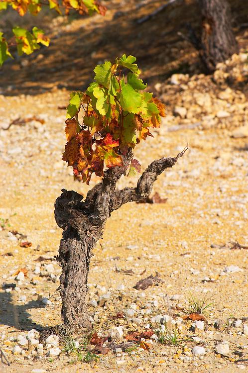 Domaine Borie la Vitarèle Causses et Veyran St Chinian. Languedoc. Old, gnarled and twisting vine. Terroir soil. France. Europe.