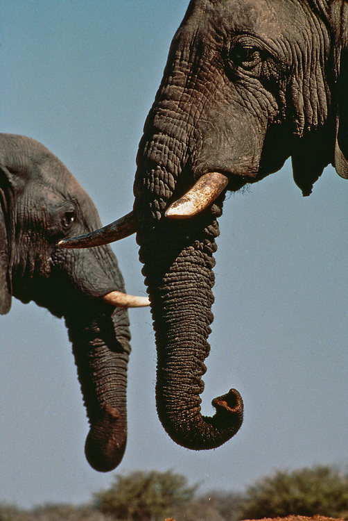 A mother and baby elephant in the grassland.