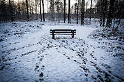 """Winter snow in the Sonian Forest, Foret de Soignes, or Zoniënwoud, an 11,000 hectare woodland to the southeast of Brussels, providing a """"green lung"""" for the polluted, traffic choked city. The forest is currently in three jurisdictions, Brussels, Flanders and Wallonia, but EU involvement in 2013 will see development of plans to re-unify the forest, for the benefit of humans and wildlife. This mage can be licensed via Millennium Images. Contact me for more details, or email mail@milim.com For prints, contact me, or click """"add to cart"""" to some standard print options."""