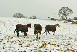 Pictured: Horses with their coats on at Lochurd Farm<br /> <br /> Poor weather conditions are taken in their stride by animals and workers on the A701 between Broughton and Moffat. <br /> <br /> Ger Harley   EEm 23 February 2017