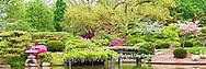 65021-03701 Japanese Garden in spring, Missouri Botanical Gardens, St Louis, MO