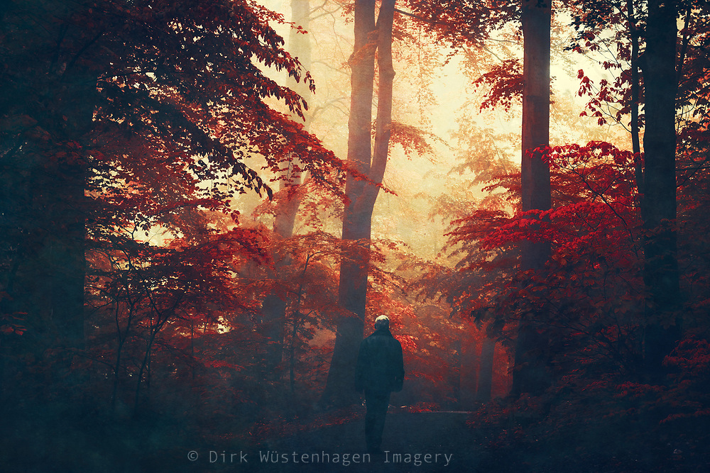 Magic and mystical forest scene in red tones