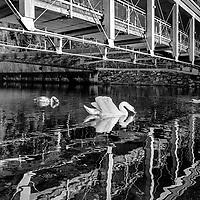 Bridges B&W