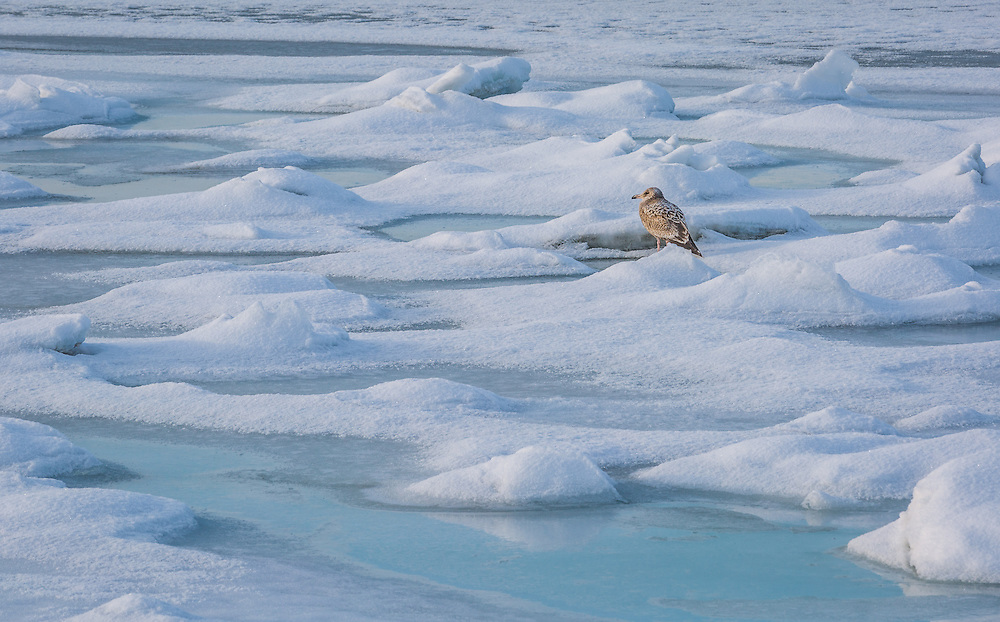 A quiet moment in a sea of ice and snow. Taken at Oyster Bay Harbor in New York.
