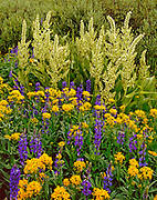 Lupine, Groundsel and Corn Lily, Carson-Iceberg Wilderness, Stanislaus National Forest, California