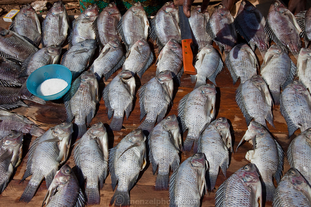 Tilapia ready for sale on a market stall in the Kibera slum in Nairobi, Kenya.  Kibera is Africa's biggest slum with nearly one million inhabitants.