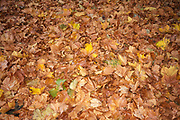 Autum leaves covering the ground.