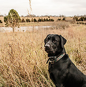 """01 December 2016- """"Pheasant Heaven"""" is photographed for Omaha Magazine."""