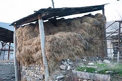 Hay, Areni