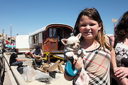 """Roma gypsy family with a pet Chihuahua and 'Burberry' style clothes, nearby Francois' traditional 'roulotte' gyspy wagon near the beach of Saintes Maries de la Mer<br /><br />""""Le Pelerinage des Gitans""""; the French gypsy pilgrimage of Saintes Maries de la Mer, Camargue, France<br /><br />Sainte Sara is an uncannonized saint, who legend says looked after the Christian Saints Marie Jacobe and Marie Salome, cousins of Mary Magdalene, who arrived, it is said, on the shores of the Camargue in a rudderless boat. Saint Sara is the patron saint of gypsies who come from far and wide to see her. There are even paintings of Sara as 'Kali' the black saint in Eastern Europe. Sara may have been the priestess of 'Ra' the sun-god or even servant girl to the Christian saints. No-one really knows.<br /><br />For a few weeks of the year, Roma, Gitan and Manouche gypsies come from all over Europe in May, camping in caravans around Saintes Maries de la Mer. It is a festive time where they play music, dance, party and christen their children. They all go to see Saint Sara in the crypt, kissing or touching her forehead. Many put robes on her shoulders, making her fat for the procession. In the main Gypsy procession of the 24th May, Saint Sara is allowed to leave her crypt, beneath the church, and is carried from the church to the shores of the mediterranean and back again. One day a year she is free from her prison. Hundred's of years ago the Gypsies used not even to be allowed into the church, only into the crypt like Sara...<br /><br />Roma gypsies still suffer oppressive prejudice and racism and are one of the ethnic groups the most persecuted and marginalised across Europe. The festival is one of the times where they celebrate with people of all races, their faith and traditions"""