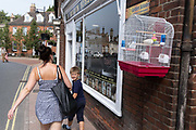 A young boy notices a caged pet budgie hanging outside Turkish barbers Golden Scissors, on Earsham Street, on 13th August 2020, in Bungay, Norfolk, England.