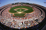 Oakland A's baseball team vs. the New York Yankees, sell-out crowd, Oakland, California. 1981. USA.