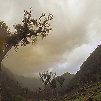 Cloud forests above Rio Huabayacu, burned for cattle grazing.