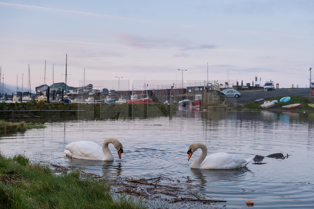 ©Licensed to London News Pictures.<br /> Aberystwyth UK  20/03/2019<br /> Swans glide gracefully on the water on a  misty and calm Vernal or Spring Equinox morning in Aberystwyth, as the day breaks over the boats moored in the harbour. Today is the first day of astronomical spring, where the night and day are of equal length. <br /> Photo credit: Keith Morris/LNP