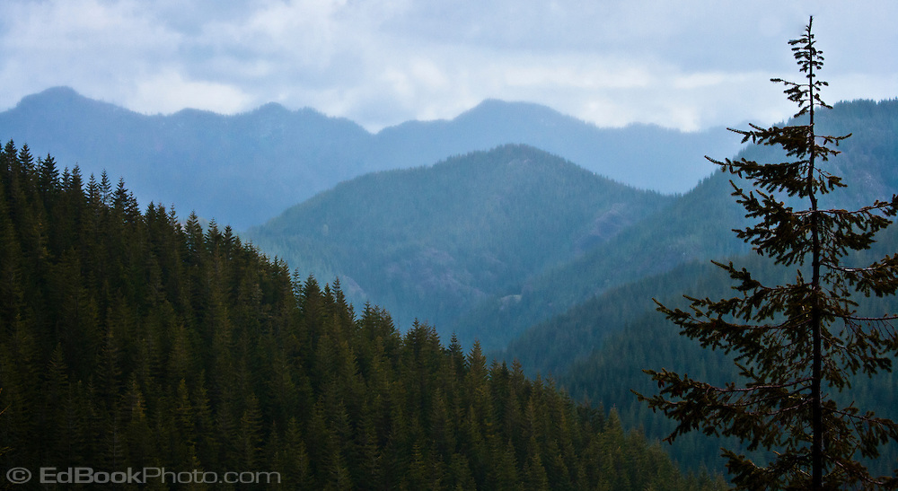 Skokomish River South Fork valley ridges of the southern Olympic Mountain Range in the Olympic National Forest.  The forest is second and third growth Douglas Fir. Washington state, USA