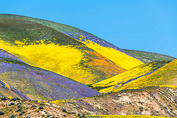 Color explosion of the super bloom in the Central California's Temblor Range just east of the Carrizo plain in San Luis Obispo County.<br /> <br /> This is a telephoto landscape so it will not have the detail of a normal lens due to heatwaves and lineal compression that are expected with telephoto landscapes that would be impossible to achieve without them.