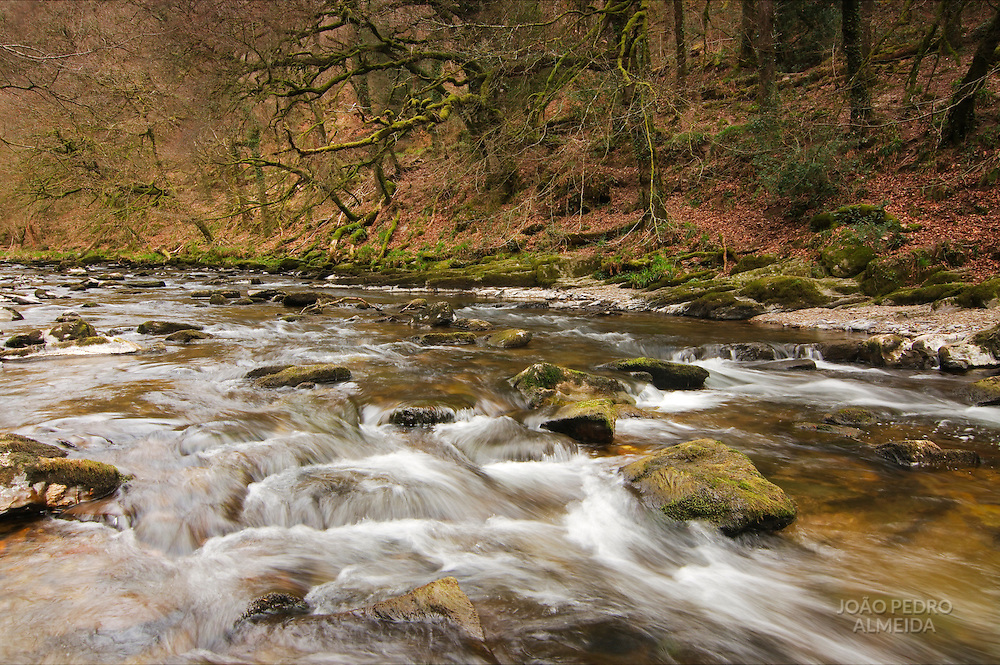 The river Lyn