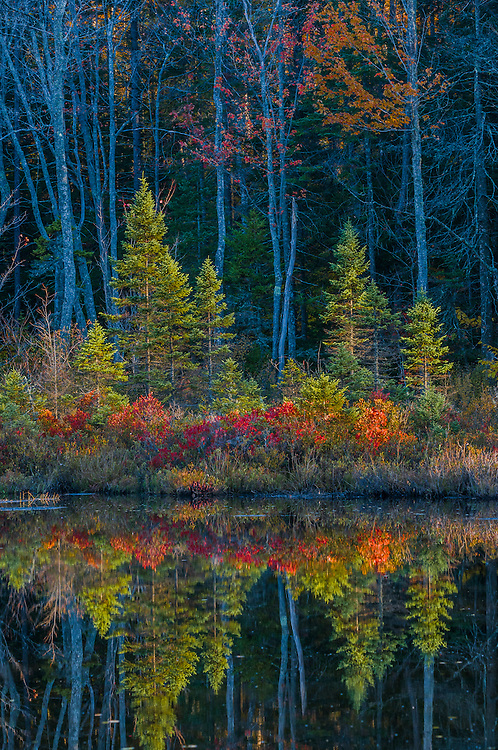 Fall colors of vegetation and shoreline trees, Springfield, NH