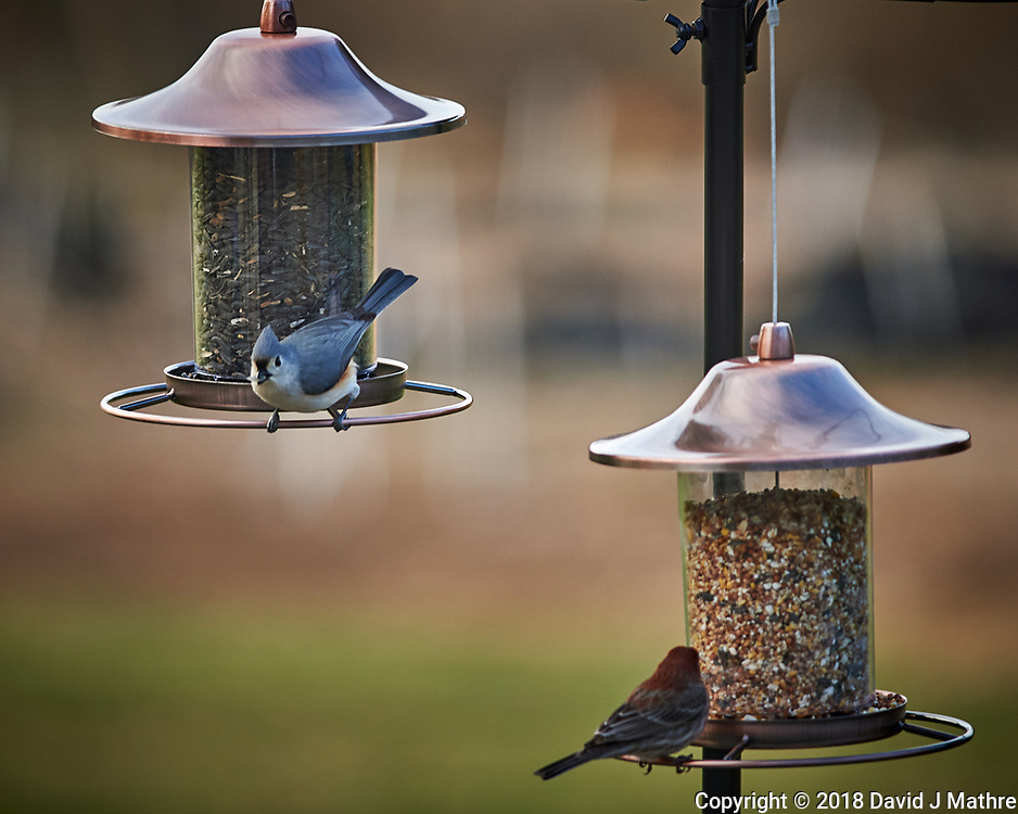 House Finch and Tufted Titmouse. Image taken with a Nikon Df camera and 300 mm f/4 telephoto lens (ISO 560, 300 mm, f/4, 1/320 sec)