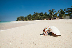 nautilus at beach, Koh Lipe, Thailand