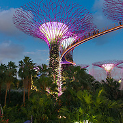 Supertrees illumination in the Gardens by the Bay, Singapore