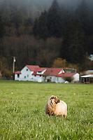 Lance's Farm Vittles near Garabaldi, OR