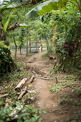16 November 2018, San José de León, Mutatá, Antioquia, Colombia: A narrow path leads the way towards pools of farmed fish, in a community in San José de León. Following the 2016 peace treaty between FARC and the Colombian government, a group of ex-combatant families have purchased and now cultivate 36 hectares of land in the territory of San José de León, municipality of Mutatá in Antioquia, Colombia. A group of 27 families first purchased the lot of land in San José de León, moving in from nearby Córdoba to settle alongside the 50-or-so families of farmers already living in the area. Today, 50 ex-combatant families live in the emerging community, which hosts a small restaurant, various committees for community organization and development, and which cultivates the land through agriculture, poultry and fish farming. Though the community has come a long way, many challenges remain on the way towards peace and reconciliation. The two-year-old community, which does not yet have a name of its own, is located in the territory of San José de León in Urabá, northwest Colombia, a strategically important corridor for trade into Central America, with resulting drug trafficking and arms trade still keeping armed groups active in the area. Many ex-combatants face trauma and insecurity, and a lack of fulfilment by the Colombian government in transition of land ownership to FARC members makes the situation delicate. Through the project De la Guerra a la Paz ('From War to Peace'), the Evangelical Lutheran Church of Colombia accompanies three communities in the Antioquia region, offering support both to ex-combatants and to the communities they now live alongside, as they reintegrate into society. Supporting a total of more than 300 families, the project seeks to alleviate the risk of re-victimization, or relapse into violent conflict.