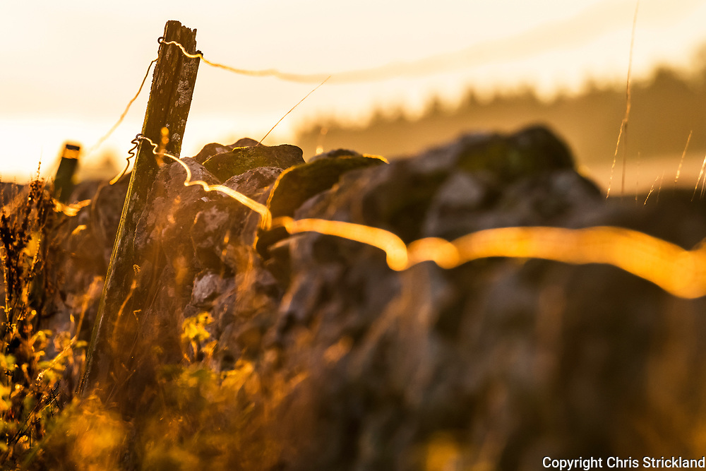 Ancrum, Jedburgh, Scottish Borders, UK. 21st November 2018. A dry stone wall at Broom Covert is illuminated by the late afternoon sun near Ancrum village.