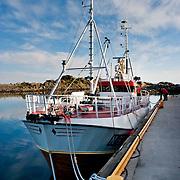 Three weeks aboard the Kong Harald. Hurtigruten, the Coastal Express. Stamsund in the Lofotens.