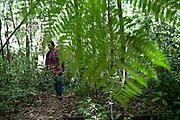 Bosque del Arce