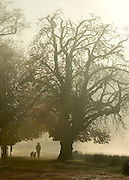 © Licensed to London News Pictures. 06/11/2014. Richmond, UK. A woman walks her dogs.  People and animals during a frosty start to the day on 6th November 2014. Temperature fell across the country overnight. Photo credit : Stephen Simpson/LNP