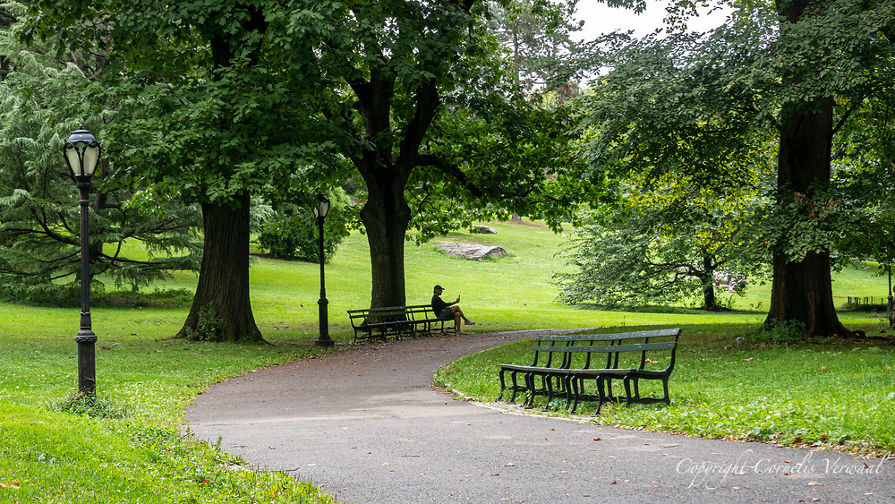 Seen at Cedar Hill in Central Park, Tuesday Sept. 1, 2020.