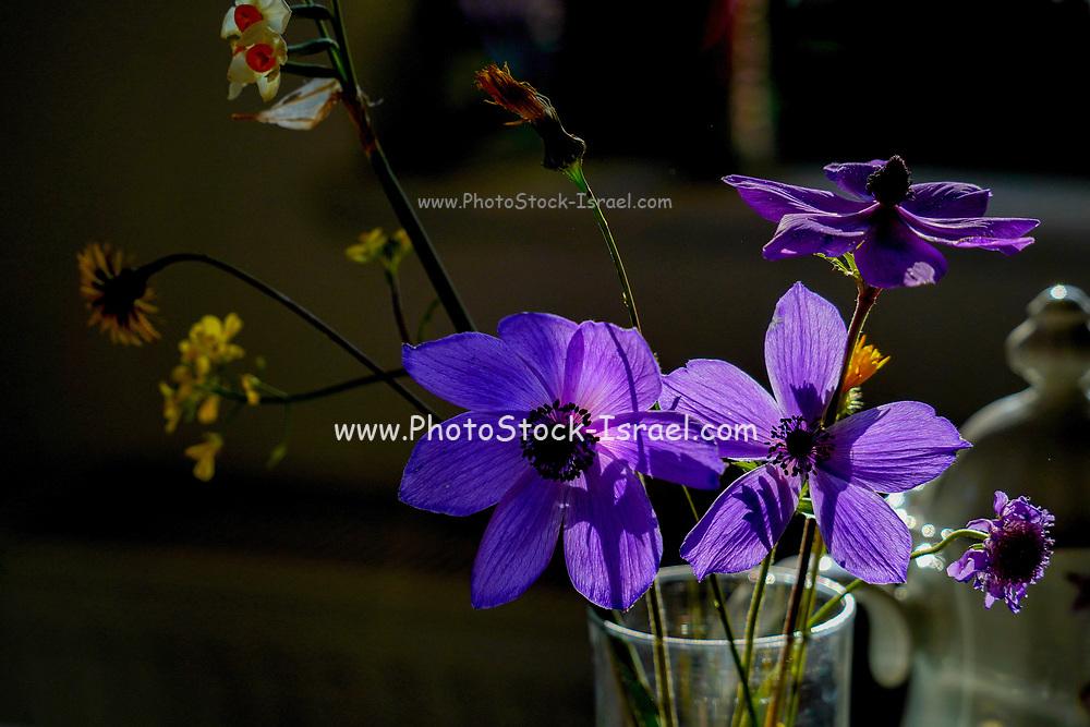 back lit purple flower with dramatic lighting