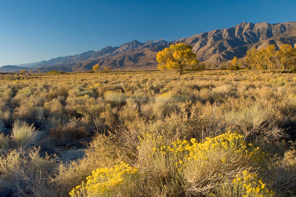 Sunrise in Owens Valley, California showing various desert plants.