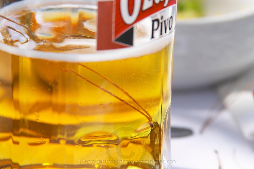 A big glass of cold beer Pivo, condensation on the glass, pine needles has fallen in the beer. Hotel and restaurant Kompas. Uvala Sumartin bay between Babin Kuk and Lapad peninsulas. Dubrovnik, new city. Dalmatian Coast, Croatia, Europe.