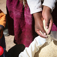 A Bolivian woman picks up a handful of quinoa from a sack.