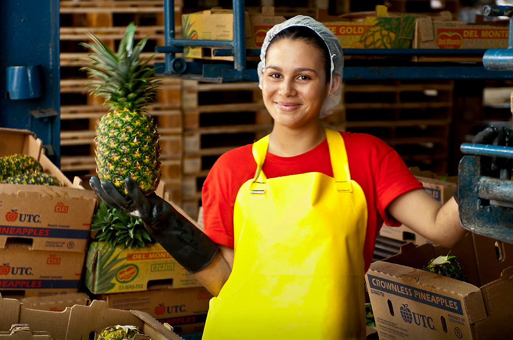 Pineapple factory worker holds up an inspected pineapple ready for shipping to the USA.  The factory is located in La Virgen de Sarapiaui in Costa Rica.