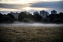 © Licensed to London News Pictures. 01/09/2019. London, UK. A mist covered landscape at first light in Richmond Park on the first day of meteorological autumn. Photo credit: Ben Cawthra/LNP