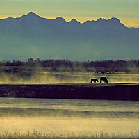 Horses graze by morning mist on river in Darhad Valley as fall begins. Horidal Saridag Mountains background.