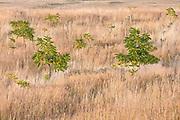Sumac design in autumn pasture, E. Washington